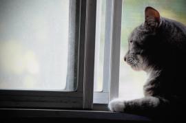 MouseMan in Window