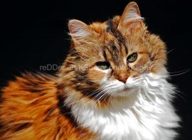 CAT-Boo-spotlight-2-cr-ksherry008