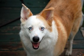 DOG_prettyblues_Kansas_copyright-KSherry022