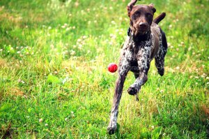 DOG_red ball_copyright-KSherry023