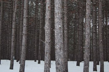 Nature-trees-cr-ksherry